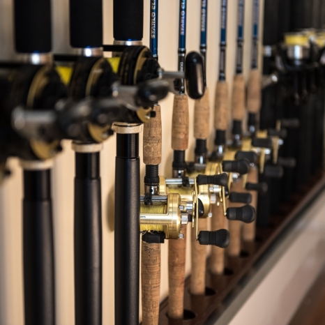 fishing rods and reels lined up