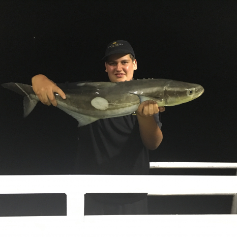 man holding cobia fish